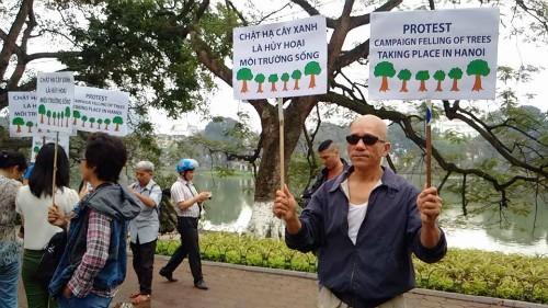 Sáng 20/3, người dân ở Hà Nội biểu thị sự không đồng tình chặt hạ hàng loạt cây xanh. Ảnh: Nguyễn Sơn.