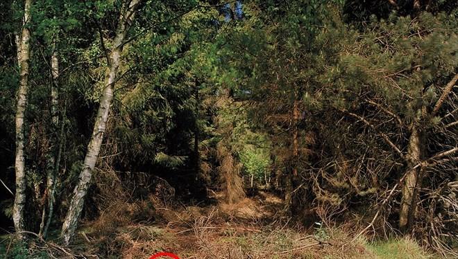 Một người lính bắn tỉa (vòng tròn đỏ) ẩn nấp trong một bụi cây trong một cuộc tập trận.