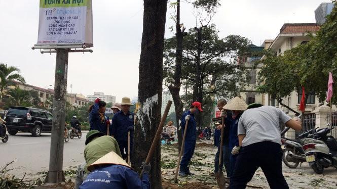 Cây xanh bị chặt hạ trên đường phố Hà Nội - Ảnh: TTO