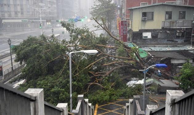 Cây đổ do bão Soudelor ở Đài Bắc, Đài Loan ngày 8-8 - Ảnh: AFP