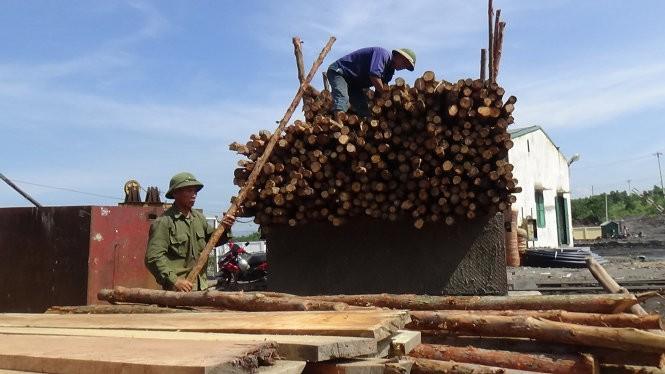 Nhiều xe gỗ được chở đến để các công nhân mang vào chống hầm lò