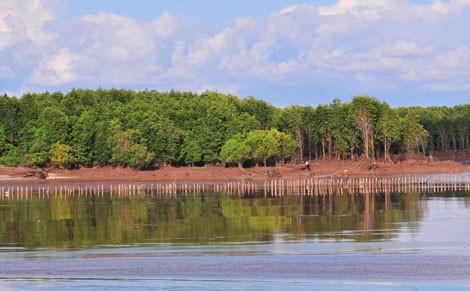 Công tác quản lý bãi bồi ven biển, ven sông của Bến Tre vẫn còn nhiều bất cập.