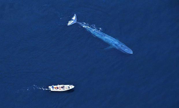 Video: Đàn cá voi lưng gù chào hỏi khiến du khách chết sững