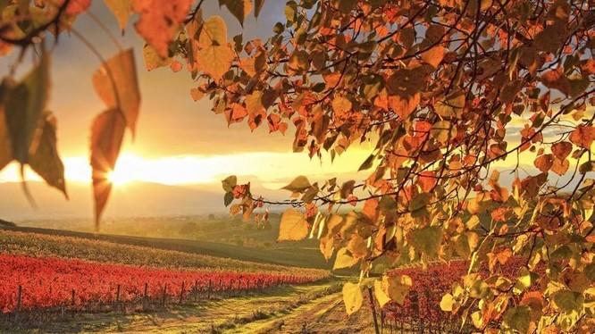Tuyệt diệu cảnh sắc nước Mỹ mùa thu