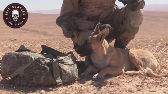 Bagera, chiến binh bốn chân thuộc lực lượng Săn IS trên vùng sa mạc tỉnh Homs