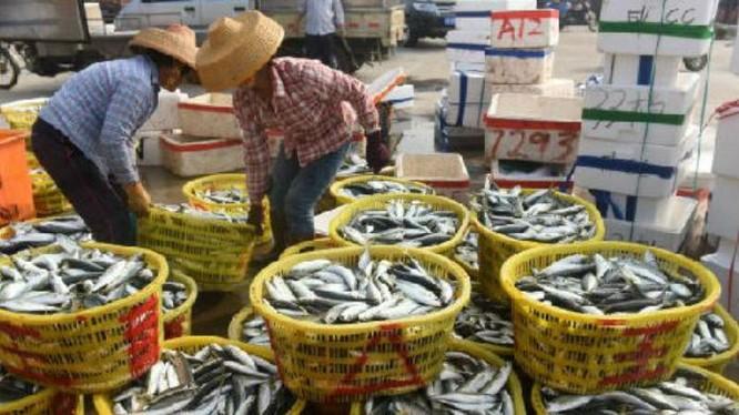 Ngư dân cảng Đàm Môn, Quỷnh Hải, tỉnh Hải Nam, Trung Quốc. Ảnh: Cankao