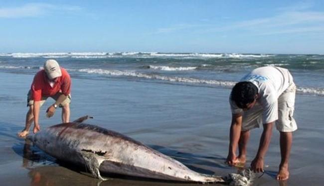 Cá chết tại biển miền Trung do Formosa