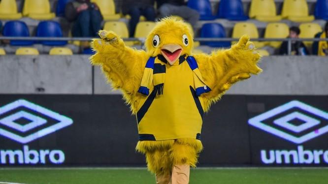 Sau vòng 16, giải vô địch quốc gia Bỉ CLB Sint-Truiden tạm thời đứng thứ 11. Ảnh CLB
