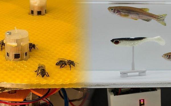 Thiết bị đầu cuối đặt giữa đàn ong và robot đặt giữa đàn cá làm nhiệm vụ phiên dịch giữa 2 loài.