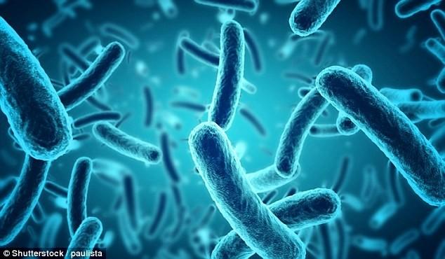 Các nhà khoa học ở Đại học Lund, Thụy Điển, đã tìm ra cách chuyển các electron từ vi khuẩn vào điện cực và thu được dòng điện từ chúng ở chế độ thời gian thực.