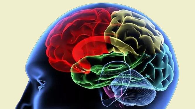 Các nhà khoa học đang tìm hiểu cơ chế một từ vựng đi từ suy nghĩ đến khi phát ra thành âm thanh