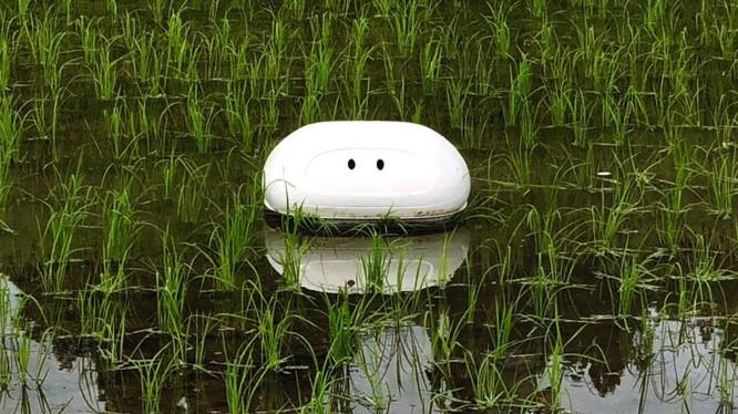 Robot hoạt động thay thế vịt trên các cánh đồng lúa (ảnh cắt từ clip)