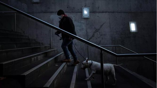 Chó có thể nhiễm Covid-19 nhưng chỉ là số lượng rất nhỏ (ảnh: Getty Images)