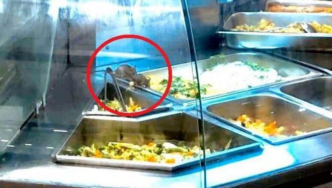 Chuột bò vào khay thức ăn ở Aeon Mall Tân Phú (ảnh: T.T.B)
