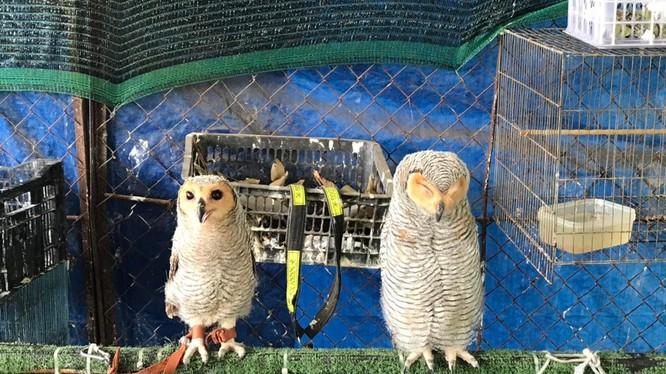 Các cá thể chim hoang dã được giải cứu tại Tây Ninh ngày 6/4 vừa qua