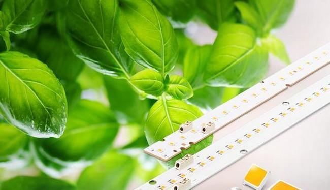 Samsung đã mở rộng các giải pháp linh kiện số của đèn LED với các sản phẩm chiếu sáng mới cho cây trồng (Ảnh Samsung Newsroom)