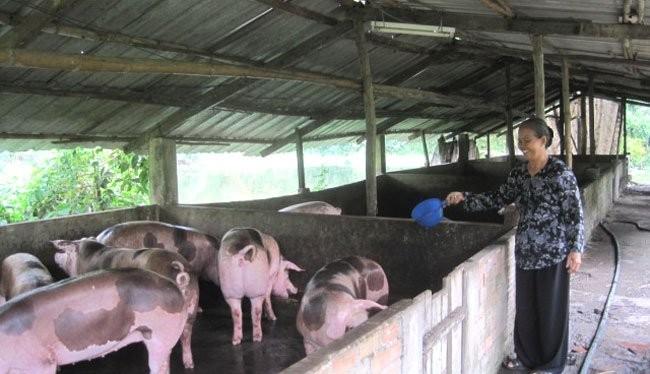 Doanh nghiệp Pháp sẽ giúp đỡ ngành chăn nuôi Việt Nam - (Ảnh minh họa).