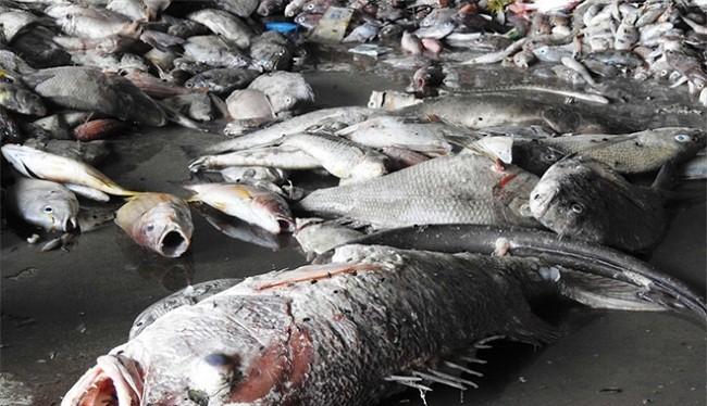 Mỗi tháng Quảng Trị thiệt hại 98 tỷ đồng vì thảm họa môi trường do Formosa gây ra - (Ảnh minh họa)