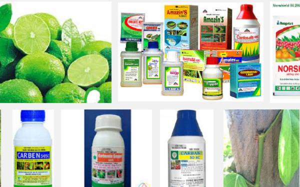 Cục Bảo vệ thực vật đang tiến hành rà soát toàn bộ lượng thuốc bảo vệ thực vật nhập khẩu trong 5 năm gần đây- (Ảnh minh họa).