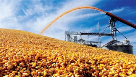 Tạm ngừng nhập khẩu bột bã ngô từ Hoa Kỳ- (Ảnh minh họa).