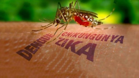 Ca nhiễm bệnh mới được phát hiện dương tính với Zika là bệnh nhân cư trú tại Quận 5.