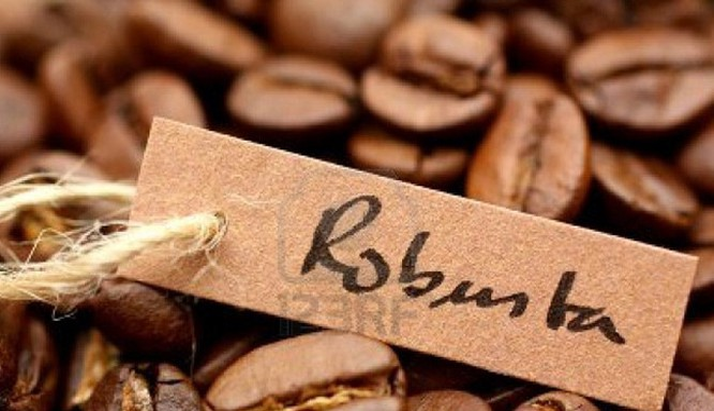 Việt Nam xuất khẩu cafe vối lớn nhất thế giới nhưng không có thương hiệu cụ thể - (Ảnh minh họa).