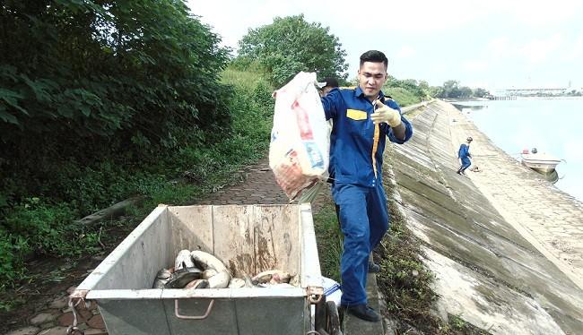 Công nhân Công ty môi trường đô thị đang thu gom cá chết đi tiêu hủy.