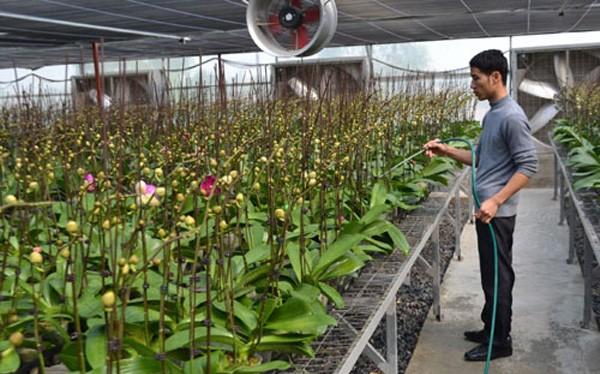 Sau hơn 5 năm hoạt động, Khu Nông nghiệp công nghệ cao của TP HCM góp phần hình thành một số vùng sản xuất hoa lan- (Ảnh minh họa).