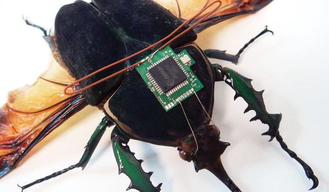 Điều khiển côn trùng bằng cách gắn chip lên lưng