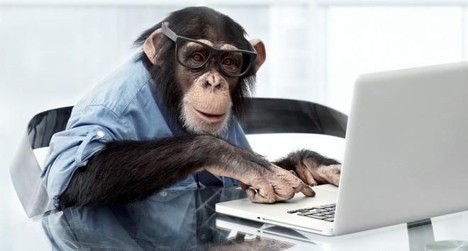 [Câu chuyện cuối tuần] Hiệu quả đầu tư của bạn có bằng một chú khỉ?