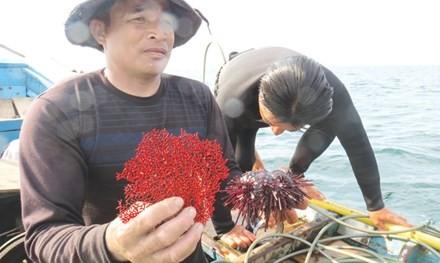 Hiện vật cú lặn thứ 3 là cây san hô đỏ bị chết.