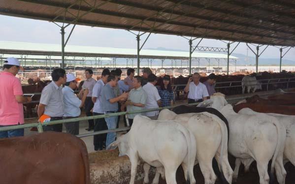 Tỉnh Kon Tum vừa ra văn bản về việc chấm dứt dự án trồng cỏ, nuôi bò thịt công nghệ cao của Công ty HAG.