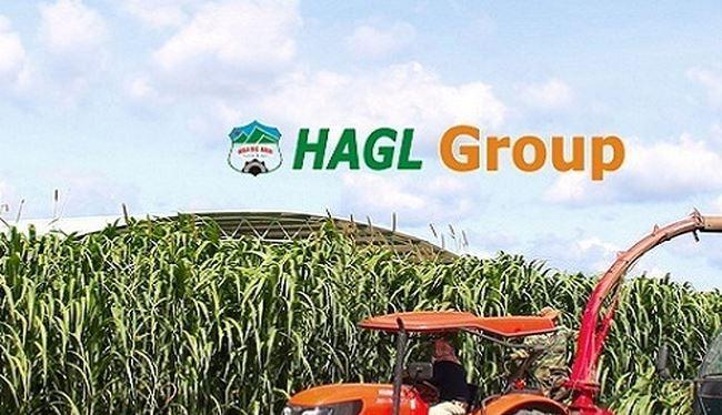 HAGL Agrico và HAGL đang tích cực tái cấu trúc nợ. (Ảnh: Internet)