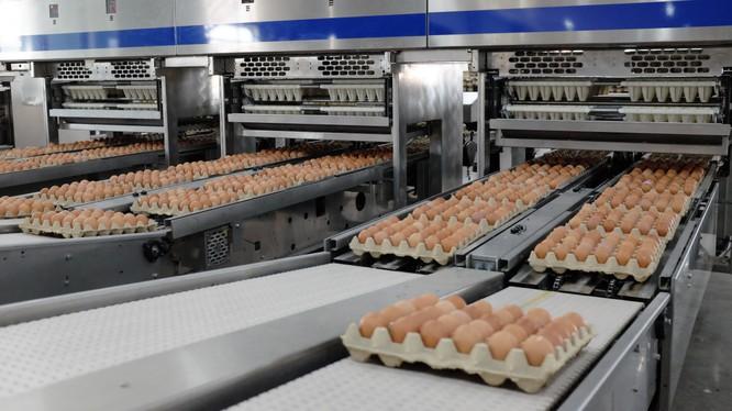 Dây chuyền đóng gói trứng gà tự động của Hòa Phát (Nguồn: HPG)