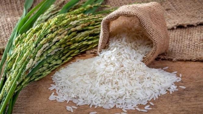 Năm 2021, sản lượng gạo của Việt Nam xuất khẩu sang ba khu vực gồm Châu Âu, Anh và Hàn Quốc dự kiến đạt khoảng 90.000 tấn (Nguồn: Internet)