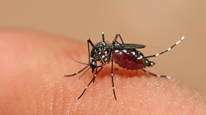 Thời tiết Hà Nội nóng ẩm, có mưa rải rác là điều kiện thuận lợi cho muỗi truyền bệnh sốt xuất huyết phát triển