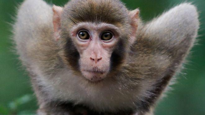 Các trường hợp bệnh nhân mắc virus herpes B đều tiếp xúc với khỉ.