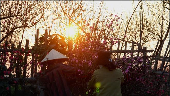 Tháng 1 thăm những làng hoa Tết vào mùa