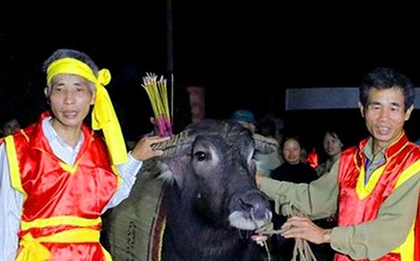 Mùng Hai Tết, về Phú Thọ xem Hội Cầu trâu