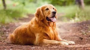 Nín thở xem chú chó tự mình vượt dòng lũ dữ