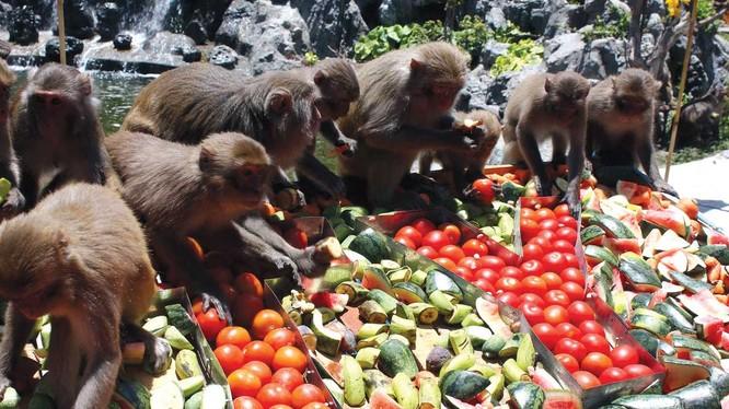 """Video: Đột nhập đảo nuôi khỉ """"hiến thận"""" độc nhất vô nhị"""