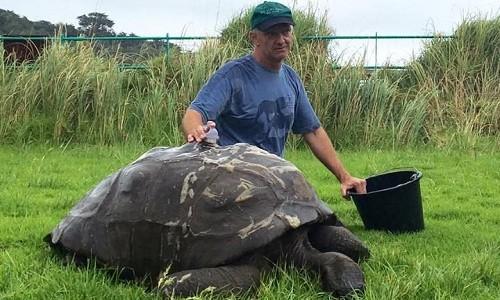 Video: Cụ rùa 'tẩy trần' chuẩn bị diện kiến Hoàng gia Anh
