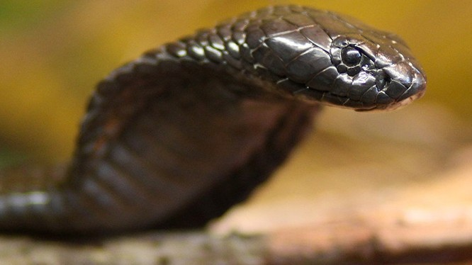 Cụ bà về hưu diệt một lúc 80 con rắn trong vườn nhà