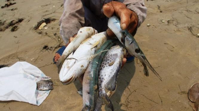 Báo Nga: Sự cố công nghiệp là nguyên nhân khiến cá chết hàng loạt ở Việt Nam