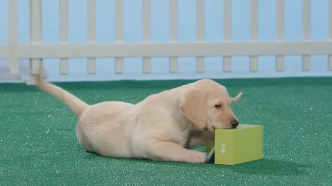 """Video: Bị chó gặm, LG G5 vẫn 'thi gan cùng tuế nguyệt"""""""