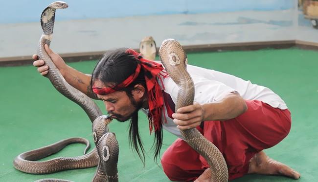 Video: Nghệ sĩ Thái Lan trổ tài điều khiển rắn độc tại Nha Trang