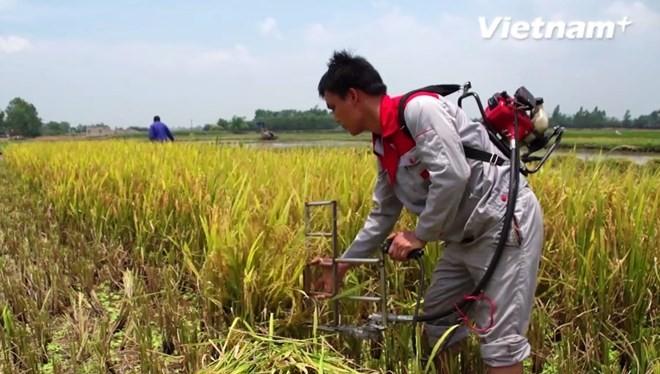 Máy cắt lúa cá nhân giúp giảm thiểu sức lao động cho bà con nông dân.
