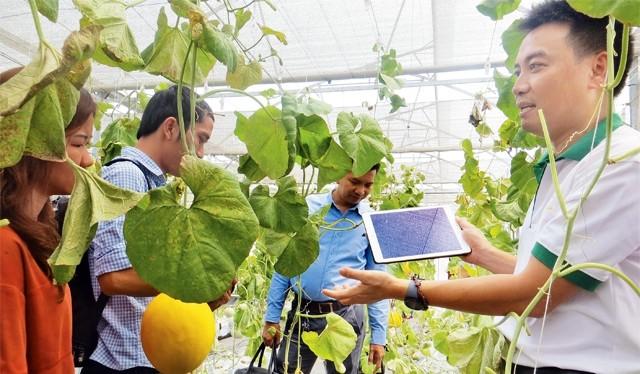 Nông dân trồng dưa lưới công nghệ cao năng suất ổn định, không lo đầu ra. Ảnh minh hoạ: Internet.