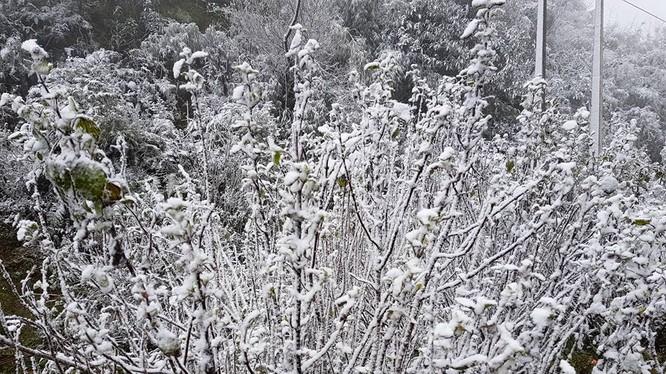 Băng giá, mưa tuyết đã bắt đầu xuất hiện ở Sapa sáng qua (31/1).