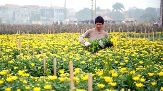 Khu vực nông thôn Hà Nội có nhiều huyện đạt thu nhập bình quân đầu người khá cao, lên đến gần 50 triệu đồng/năm.